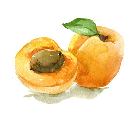 Apricot with leaves isolated on white background, watercolor illustration