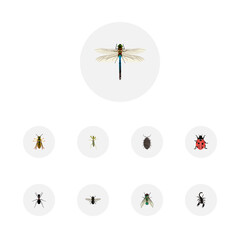 Realistic Damselfly, Midge, Bee And Other Vector Elements. Set Of  Realistic Symbols Also Includes Wasp, Bug, Ant Objects.