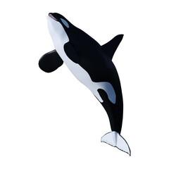 3D Rendering Orca Killer Whale on White