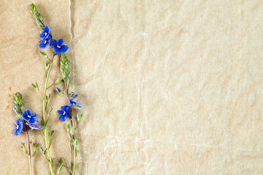 Blue wildflowers on the old paper background