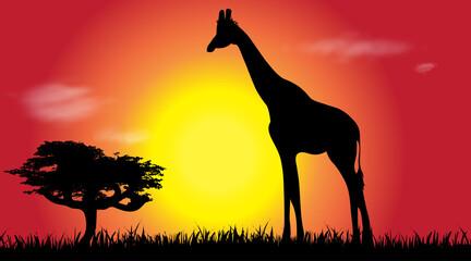 Vector silhouette of giraffe at savana.
