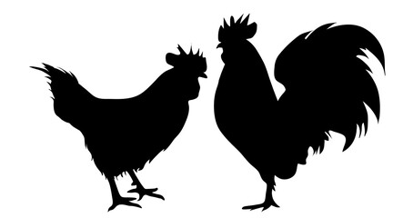 Vector silhouette of rooster hen on white background.