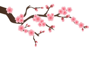 Cherry blossom flowers background. Sakura  pink flowers isolated background.