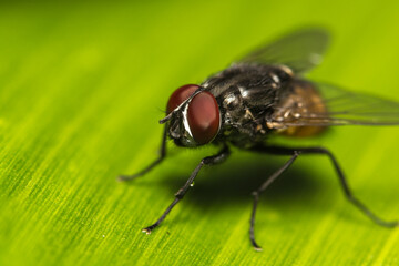 Close-up of fly on banana leaf