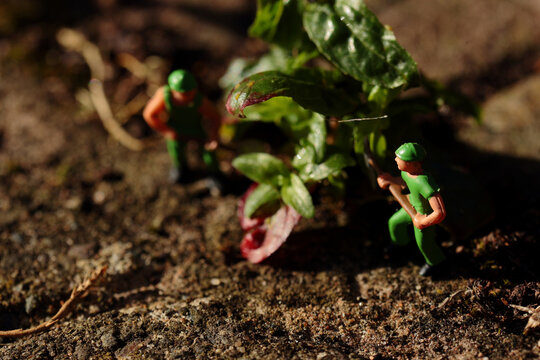 Miniature scale model builders removing garden weed from a path