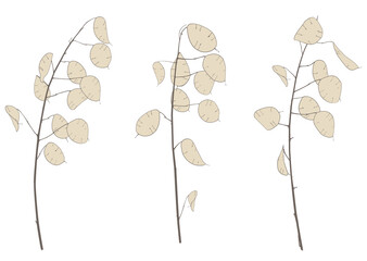 Three branches of fine graceful lunarians, vector illustration, isolated object