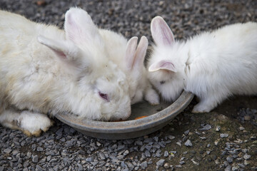 Rabbit family eating food