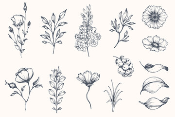 Vector collection of hand drawn plants. Botanical set of sketch flowers and branches Wall mural