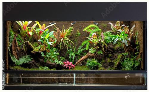 Tropical Rain Forest Terrarium Or Paludarium For Rainforest Animals