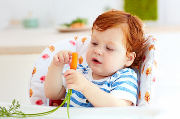 happy infant baby eating fresh carrot while sitting in high chair on the kitchen