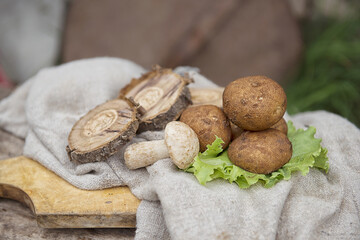 white mushroom on burlap