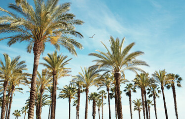 Travel, tourism, vacation, nature and summer holidays concept - palm trees over a blue sky background amazing landscape
