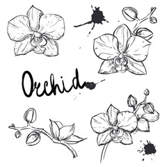 hand drawn set illustrations monochrome silhouette of orchid. sketch.