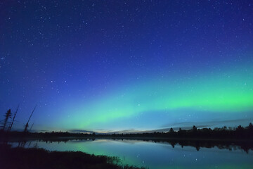 Northern wilderness land and trees silhouetted with deep blue starry sky and northern lights