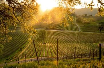 Sunrise at the Vineyard