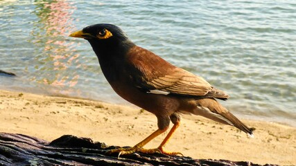 Bird sitting on a table