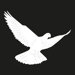 vector image of a dove flying