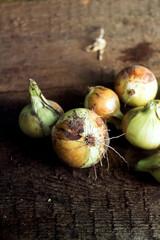 Ripe onions on a wooden board