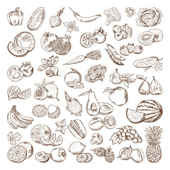 Vector hand drawn pictures of fruits and vegetables. Doodle vegan food illustrations