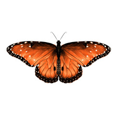 butterfly are symmetrical and the top is red with spots , sketch vector graphics color picture