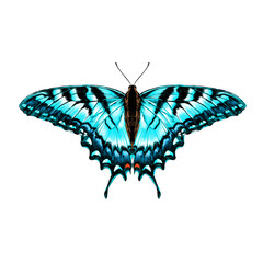 blue butterfly with blue pattern on the wings of the symmetric top view sketch vector graphics color picture