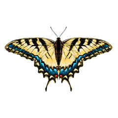 yellow butterfly with blue pattern on the wings of the symmetric top view sketch vector graphics color picture
