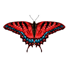 red butterfly with blue pattern on the wings of the symmetric top view sketch vector graphics color picture