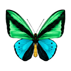 butterfly symmetric top view green and blue colors, sketch vector graphics color picture