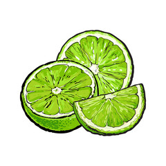 Unpeeled green lime halves and pieces, hand drawn sketch style vector illustration on white background. Hand drawing of unpeeled lime, half, quarter, side view