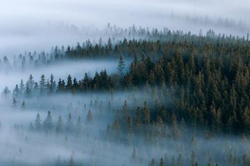 Foggy landscape. Foggy valley of Sumava national park. Detail of forest, Boubin mountain of Czech Republic.