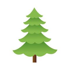 cartoon pine tree natural plant conifer image vector illustration