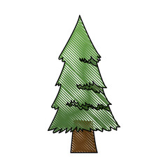 cartoon pine tree natural plant of forest image vector illustration