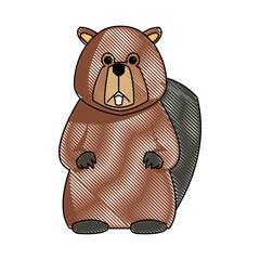 cartoon beaver teeth animal of forest vector illustration