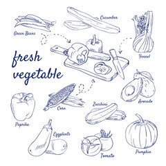 Doodle set of fresh vegetable on cutting board - knife, Green Beans, Cucumber, Fennel, Avocado, Zucchini, Corn, Paprika, Eggplants, Tomato, Pumpkin, hand-drawn. Vector sketch illustration isolated.
