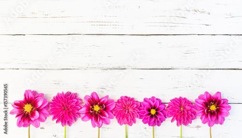 Blumen Rosa Blüten Dekoration auf Holz Hintergrund weiß\