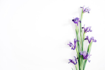 Beautiful purple iris flowers bouquet on white background. Flat lay, top view