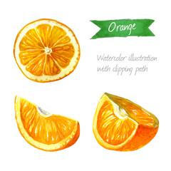 Orange slices isolated  watercolor illustration.
