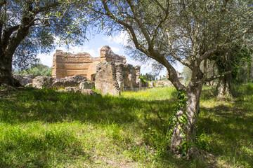 villa Adriana, ulivi e rovine