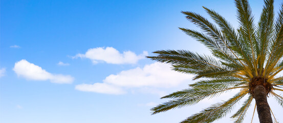 palme von unten gegen den blauen himmel - panorama