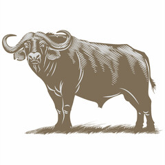 Буйвол африканский на траве, иллюстрация
