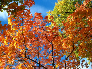 A look at the sky in autumn forest