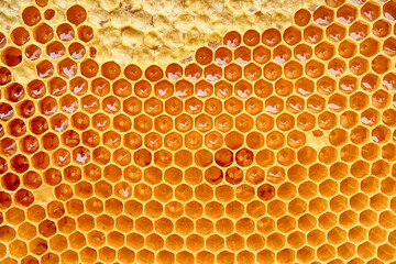honeycomb with honey