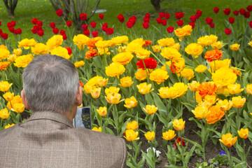 a man photographs the tulips