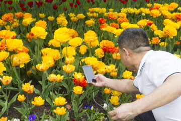 a man photographs the tulips