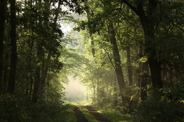 Keuken foto achterwand Bos in mist Country road through the spring forest