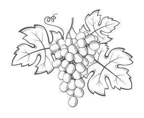 image of grapes with bunches and leaves