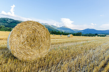 Hay bales on agricultural fields