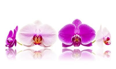 Fototapeta Mix storczyki orchidee białe i różowe kwiaty izolowane odbicie lustrzane obraz