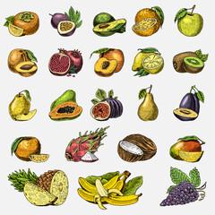 set of hand drawn, engraved fresh fruits, vegetarian food, plants, vintage orange and apple, grape with coconut, gragonfruit, pear, peach, plum.
