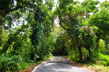 Famous Road to Hana fraught with narrow one-lane bridges, hairpin turns and incredible island views, Maui, Hawaii